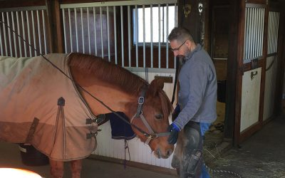 Winning Clients' Confidence: 4 Tips for Farriers